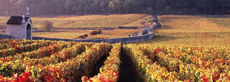 borgogna-vigneti vineriaparolin