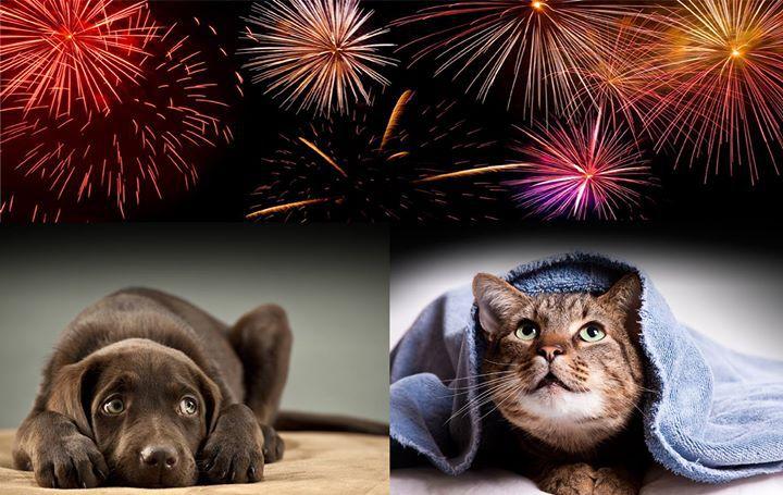 Ecco come aiutare i nostri animali domestici questa notte di botti