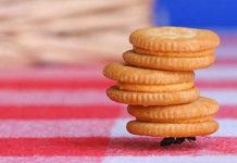 Un parquet adatto per ogni stile di arredo moondo - Come allontanare le formiche da casa ...