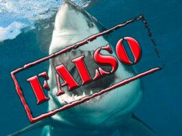 Attivista Greenpeace attaccato dallo squalo