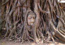 Gli alberi più longevi al mondo