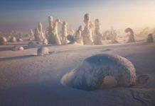Le Sentinelle dell'Artico