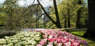 Parco dei tulipani