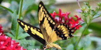 casa delle farfalle a Roma