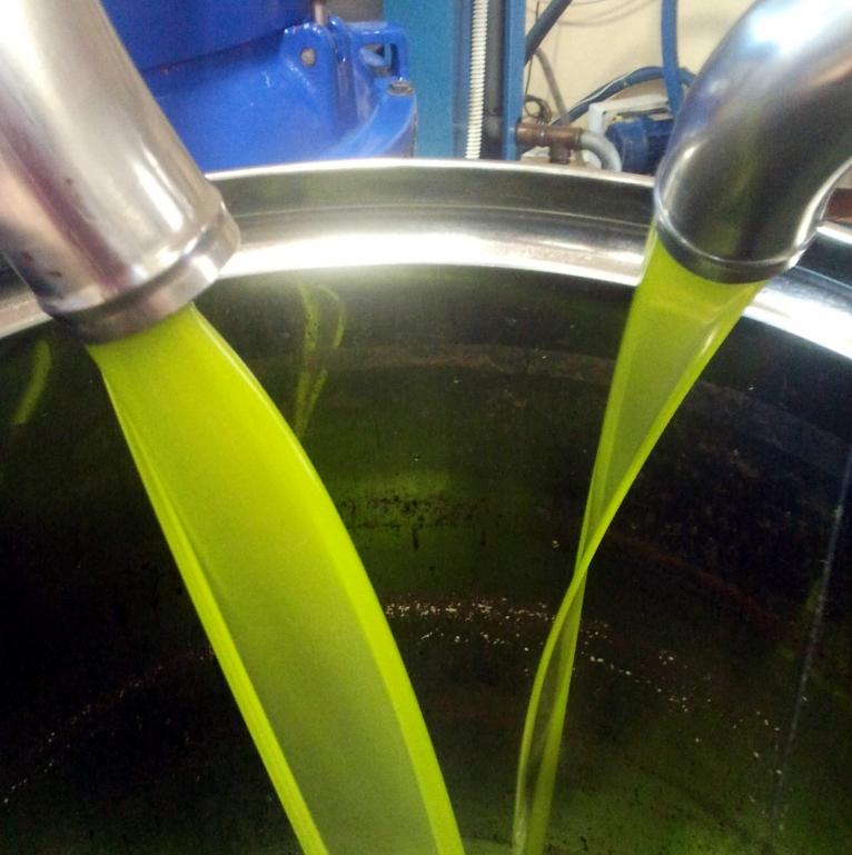 Come riconoscere un buon olio extra vergine d'oliva