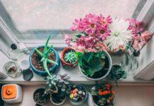 piante contro l'inquinamento