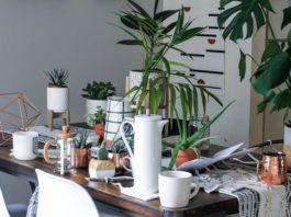 piante che non richiedono manutenzione