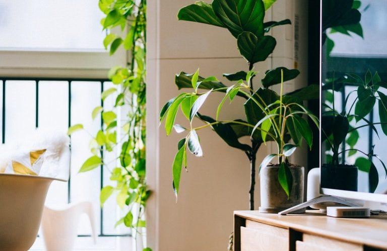 Le piante hanno bisogno di poco ossigeno per vivere