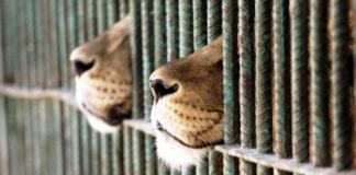 Circo con gli animali no