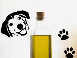 olio di oliva nella dieta del cane