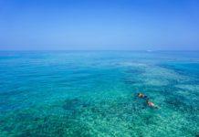 barriere coralline più belle secondo il wwf