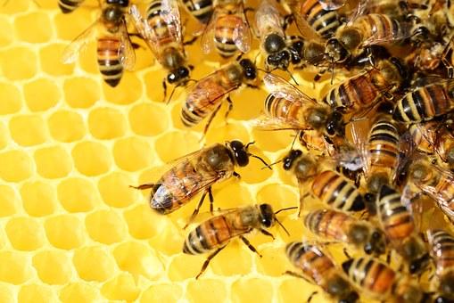 Il Parlamento europeo chiede di ridurre i fitofarmaci per proteggere le api