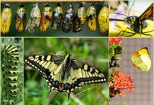 da bruco a farfalla