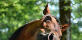 a caval donato