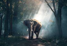 memoria degli elefanti