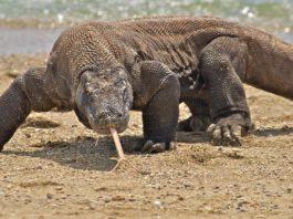 Gli animali più pericolosi del mondo