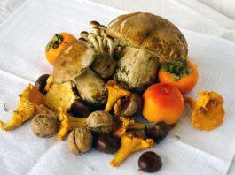proprietà dei funghi