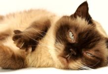 curiosità sui gatti