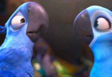 specie di uccelli