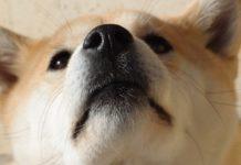 cani annusano le nostre parti intime