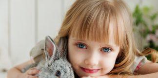 coniglio domestico