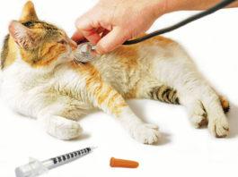Cani e gatti diabetici