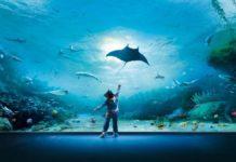acquari più belli del mondo