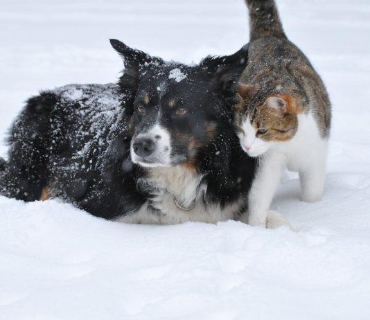 Come proteggere gli animali dal freddo?