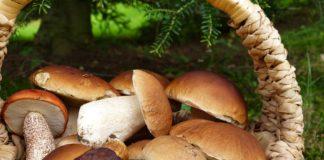ricette con funghi porcini