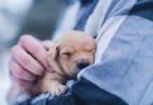 foto di animali carini