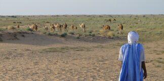 mauritania di moda le donne grasse