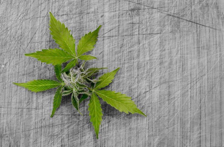 Salvini dichiara guerra alla cannabis