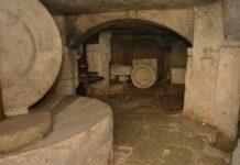 museo dell'olio extra vergine d'oliva