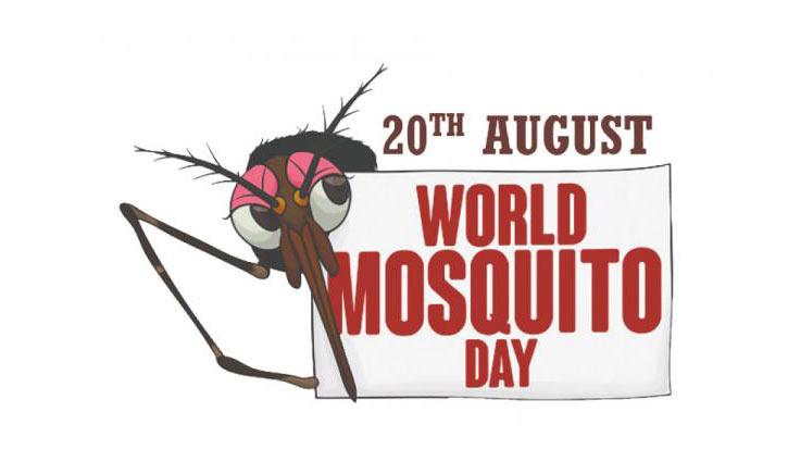 Oggi è il World Mosquito Day: ogni anno la zanzara uccide oltre 700.000 persone
