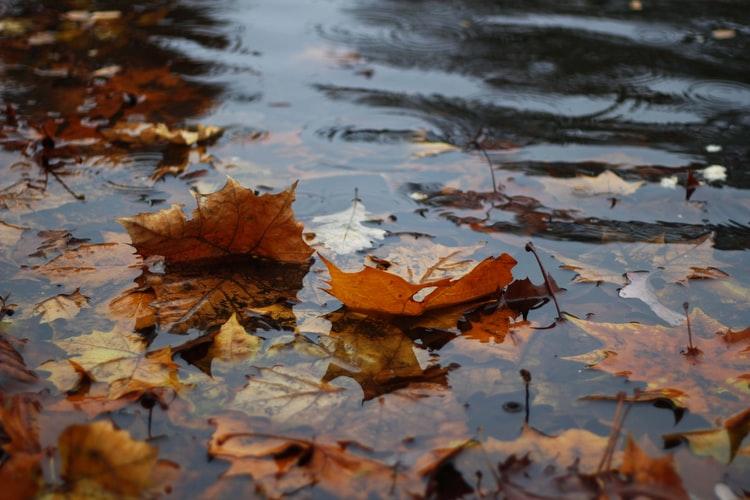 Novembre e la pioggia e un'Italia che fatica a trovare buon senso e condivisione