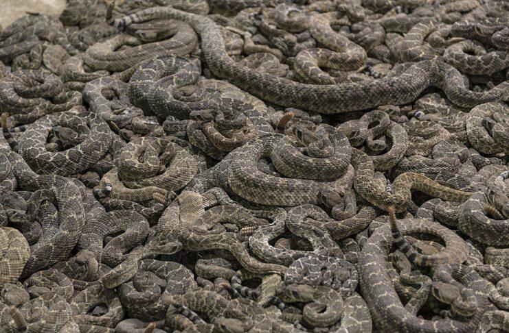 fossa dei serpenti