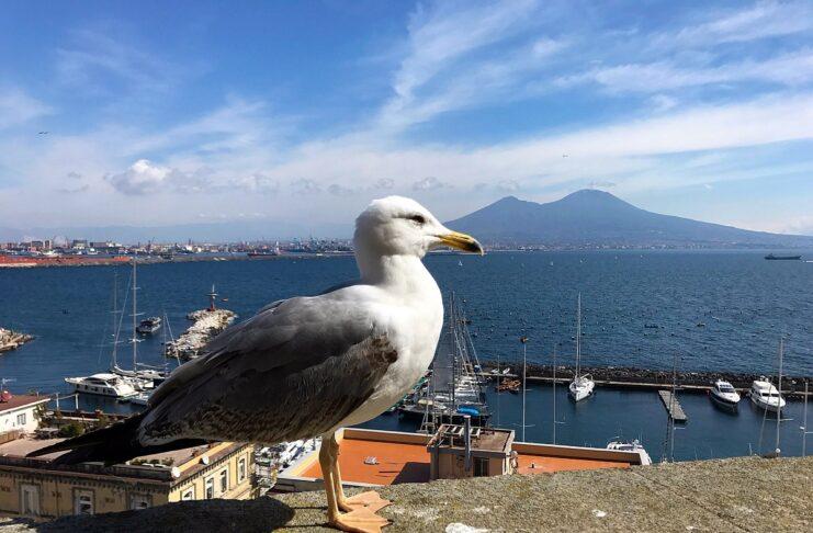 Napoli gabbiani